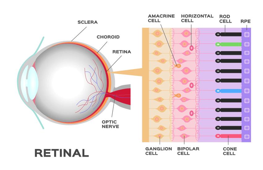 Augenlasern Alter - Ab und bis wann möglich?