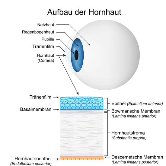 Augenlasern in Dresden - Augenklinik