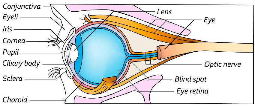 Augenlasern in Wien - Augenklinik
